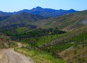 Santa Monica Mountains in Spring